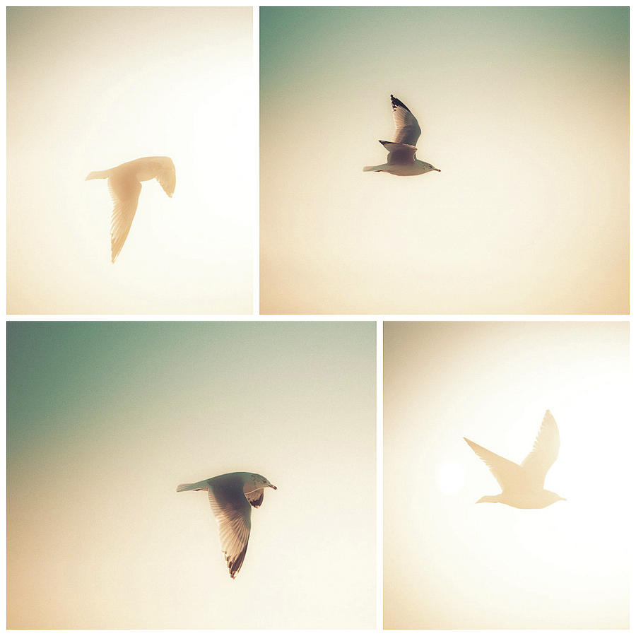 Seagull Sight by T Brian Jones
