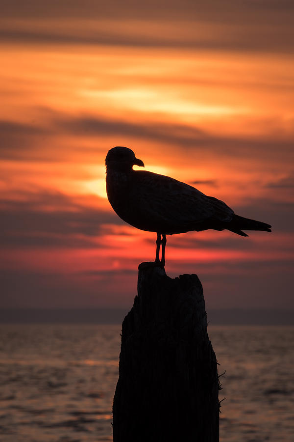 Seagull Silhouette Jersey Shore Nj Photograph by Terry DeLuco