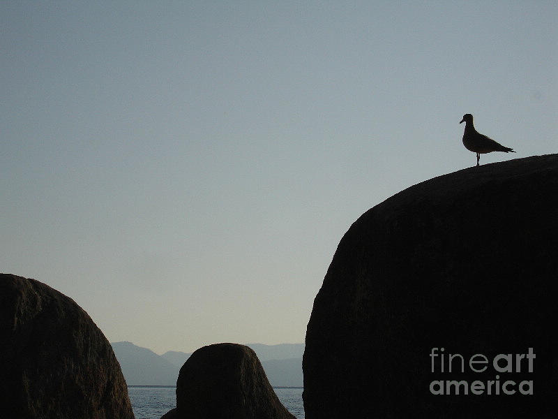 Nature Photograph - Seagull Silhouette by Silvie Kendall