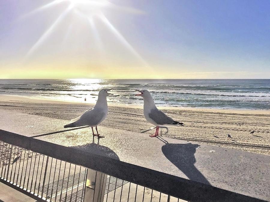 Seagull Sonnet Photograph