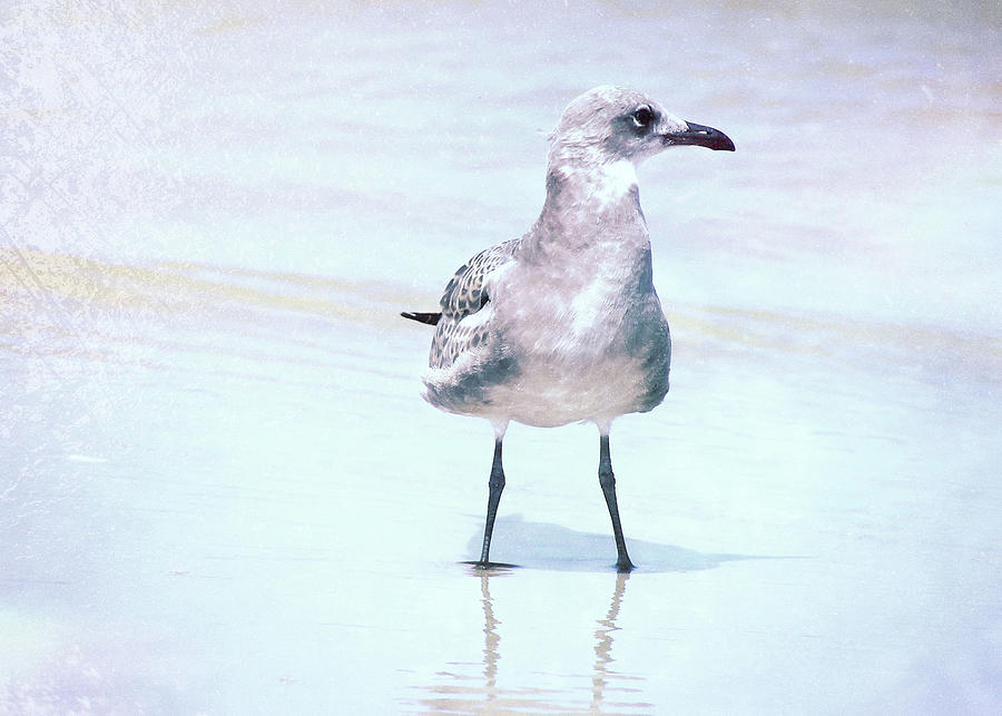 Seagull Photograph - Seagull Stance by JAMART Photography