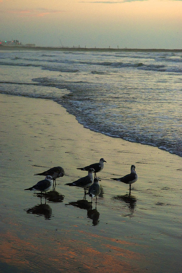 Seagulls Photograph - Seagull Sunrise by Robert Anschutz