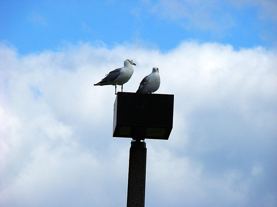 Milwaukee Photograph - Seagull by Todd Zabel