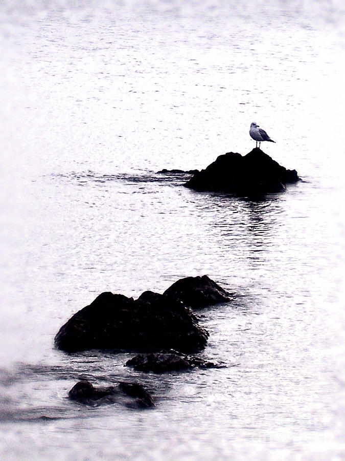 Bird Photograph - Seagull Waiting by Phil Perkins