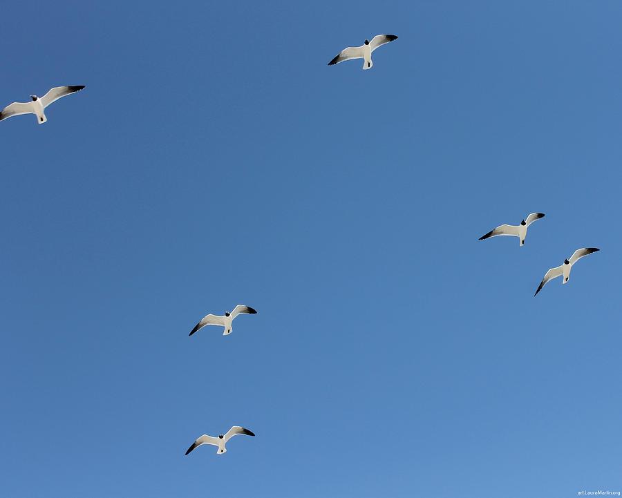 Blue Photograph - Seagulls 6 by Laura Martin