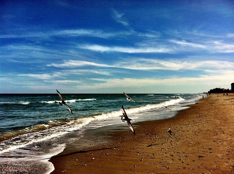 Seagulls At The Beach Photograph by Carlos Avila