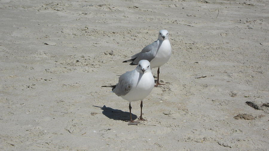 Seagulls Photograph by Emma Frost