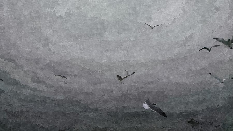 Seagulls Photograph - Seagulls In The Fog by J L Hodges