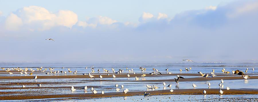 Seagull Photograph - Seagulls On A Beach by Svetlana Sewell