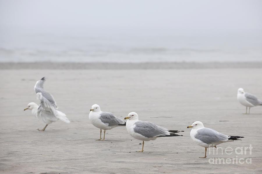 Seagulls Photograph - Seagulls On Foggy Beach by Elena Elisseeva