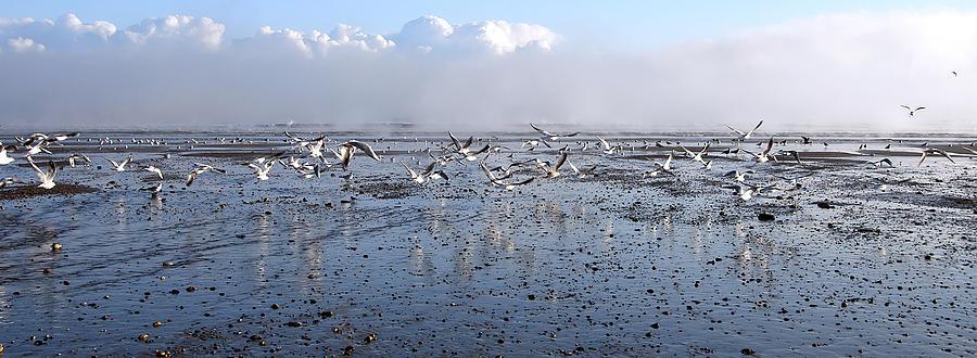 Seagull Photograph - Seagulls by Svetlana Sewell