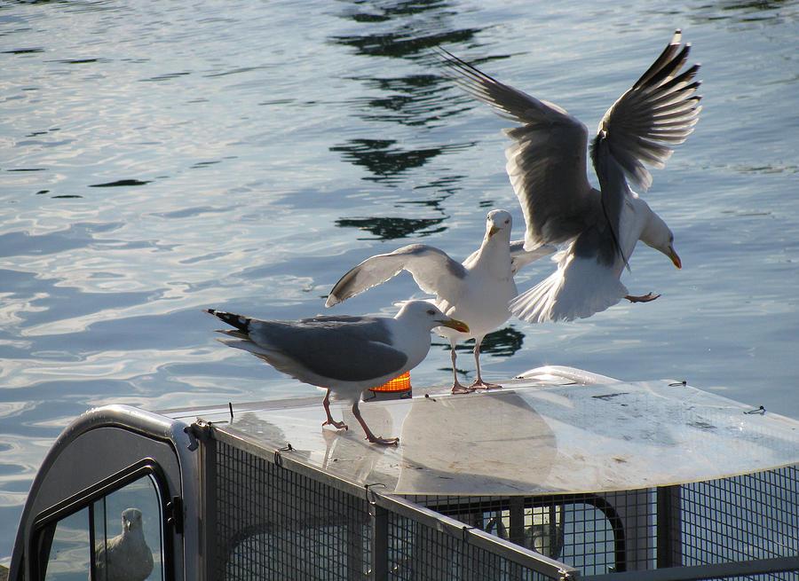 Seaguls Photograph - Seaguls 1 by Cristina Rettegi