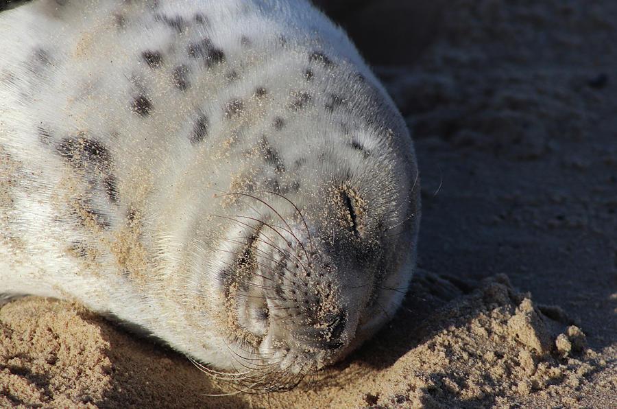 Dream Photograph - Seal Dream by David Bishop