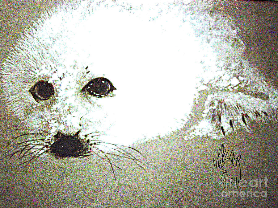 Seal Painting - Seal Pup Portrait by Paul Miller