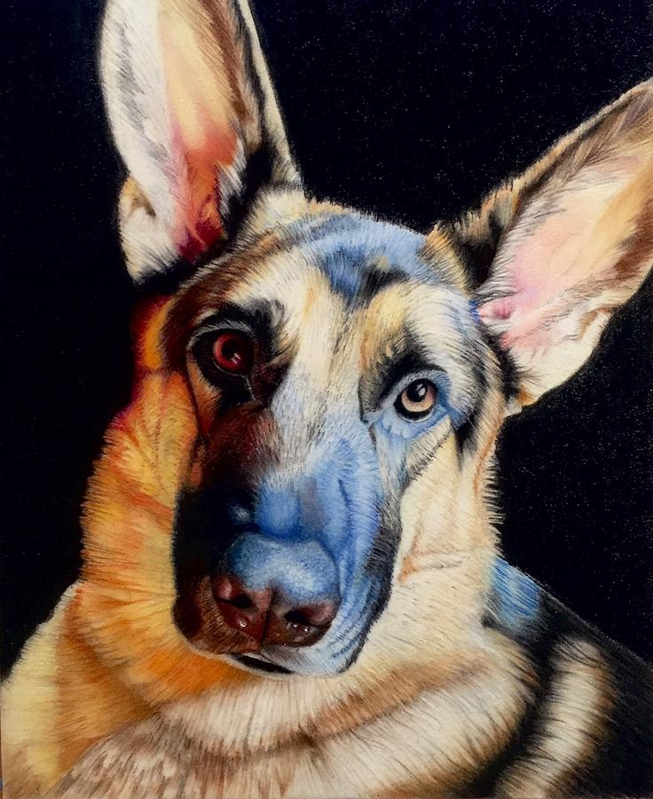 German Shepard Drawing - Seamus by David Hoque