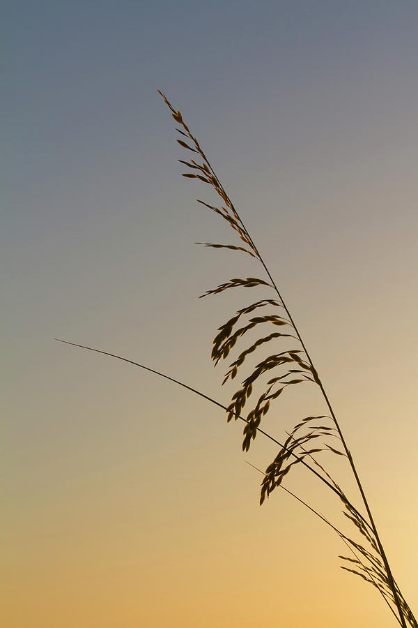 Seaoats Photograph - Seaoats At Dawn by Paul Rebmann