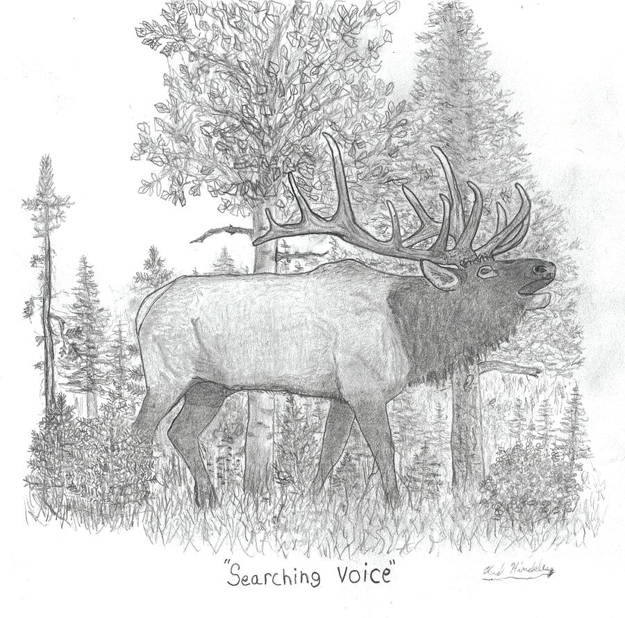 Elk Drawing - Searching Voice by Chad Hinckley