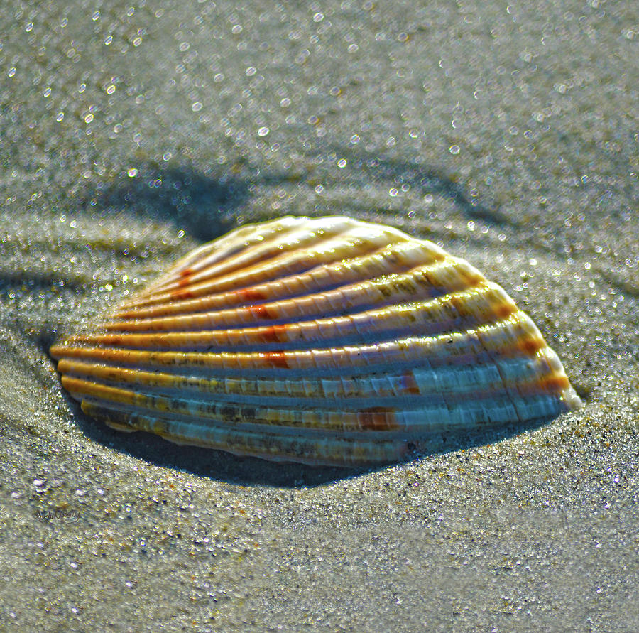 Seashell Photograph - Seashell After The Wave Square by Sandi OReilly