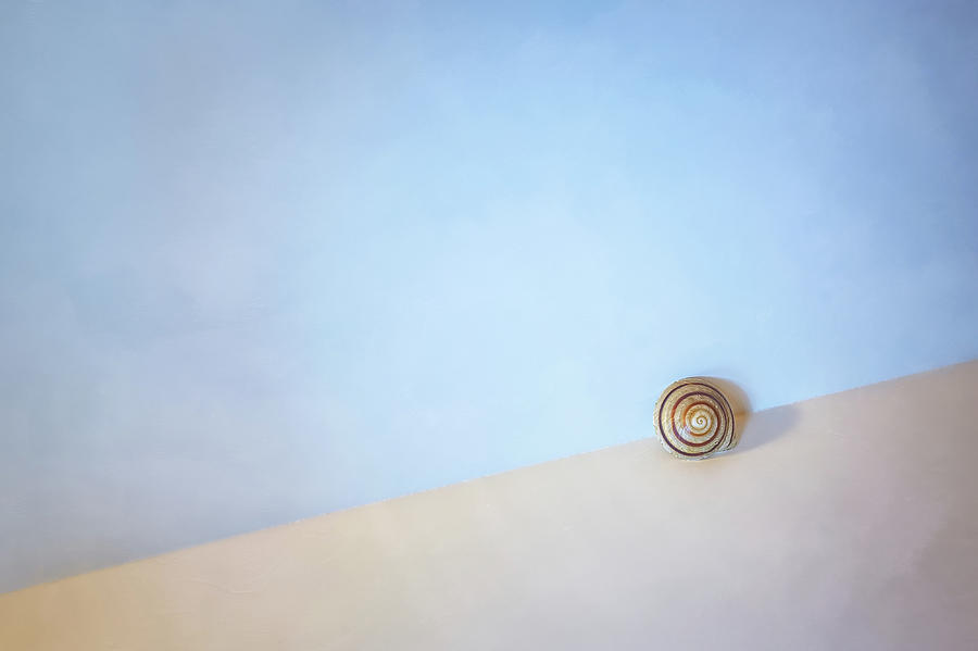 Seashell By The Seashore Photograph