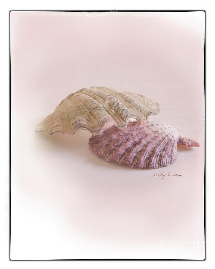 Sea Shell Photograph - Seashell Love by Betty LaRue