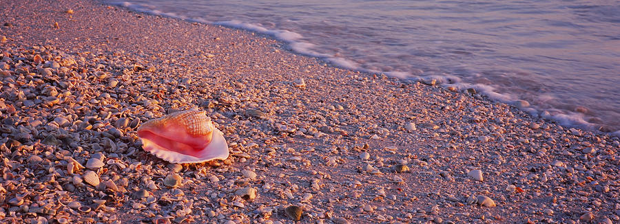 Color Image Photograph - Seashell On The Beach, Lovers Key State by Panoramic Images