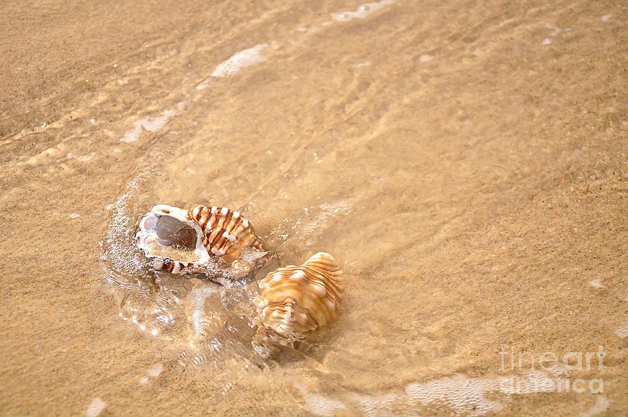 Photography Photograph - Seashell Turbulence by Kaye Menner