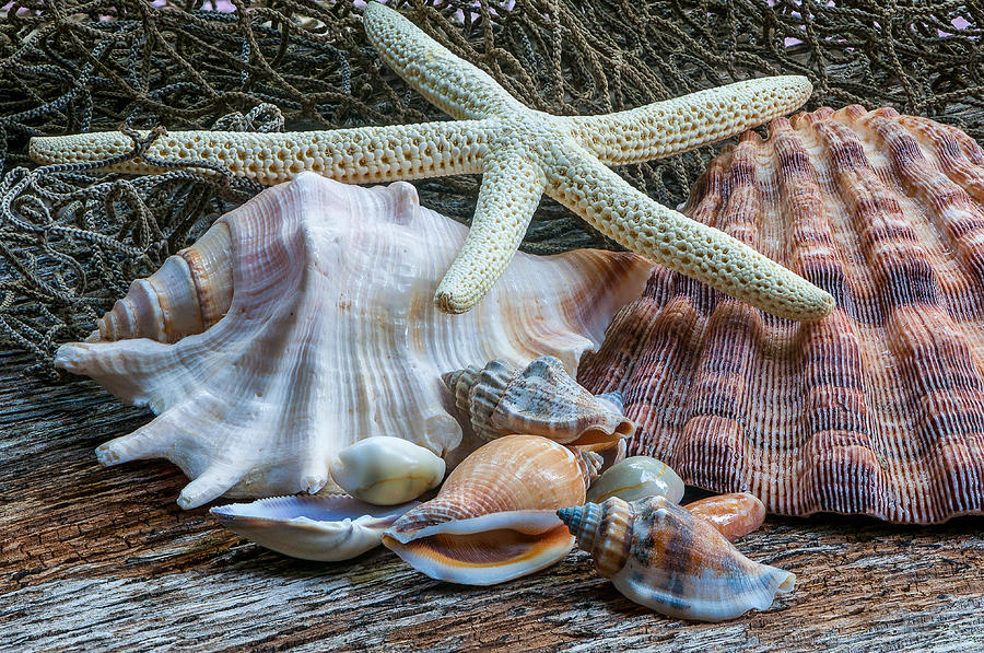 Seashells 2 by Randy Walton