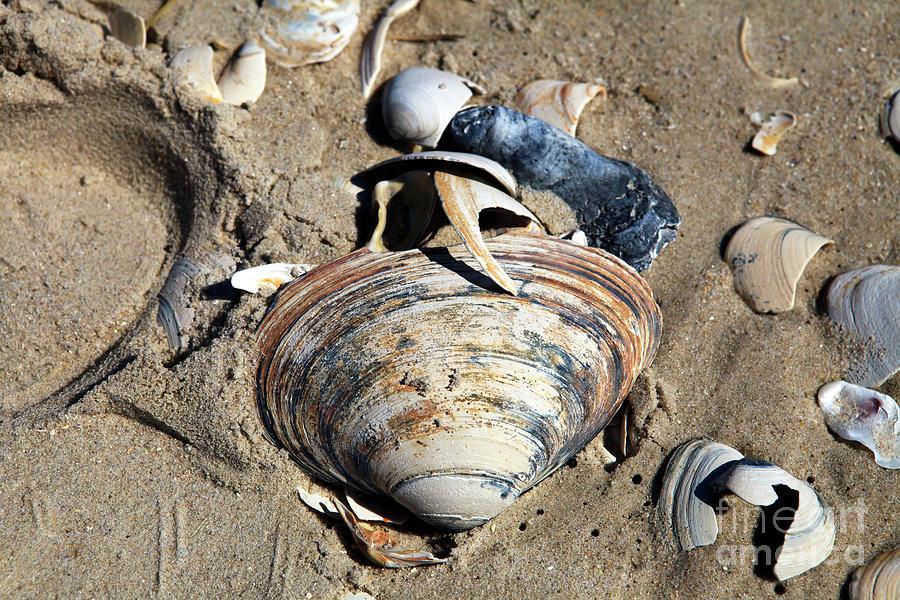 Seashell Photograph - Seashells At Holgate Beach On Long Beach Island by John Rizzuto