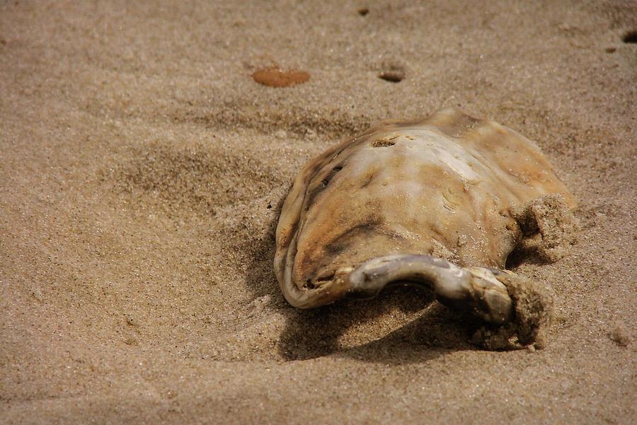 Ocean Photograph - Seashells At The Seashore by JAMART Photography