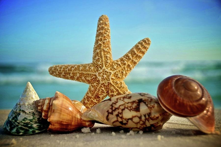 Starfish Beach Florida
