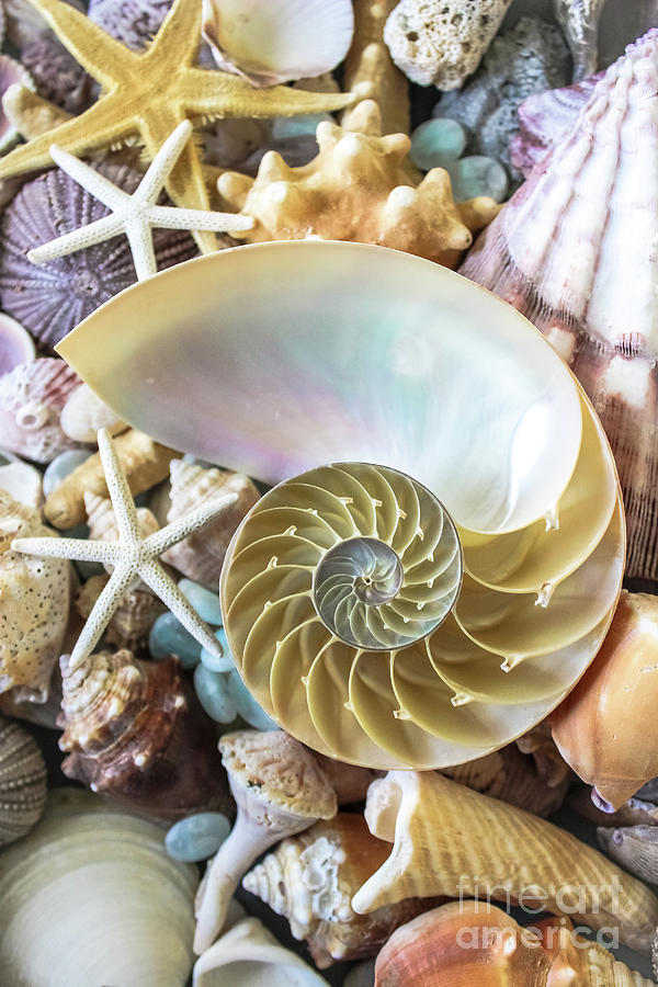Seashells by Colleen Kammerer