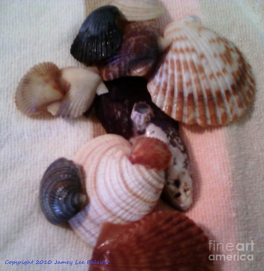 Seashells Photograph - Seashells by Jamey Balester