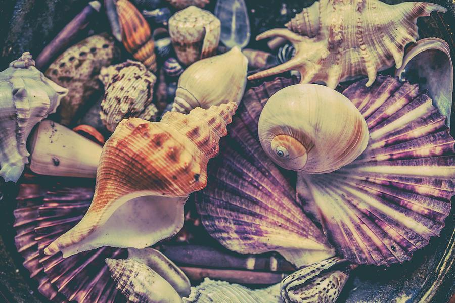 She Sells Seashells Photograph