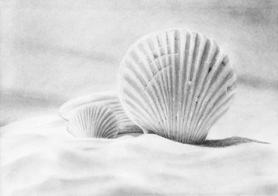 Pencil Drawing - Seashells Still Life by Nolan Clark