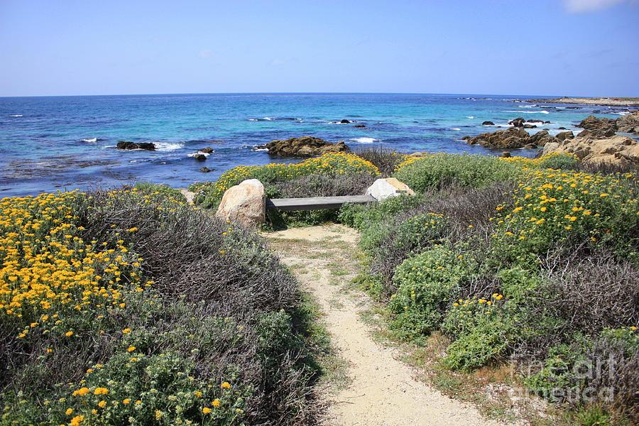 Landscape Photograph - Seaside Bench by Carol Groenen