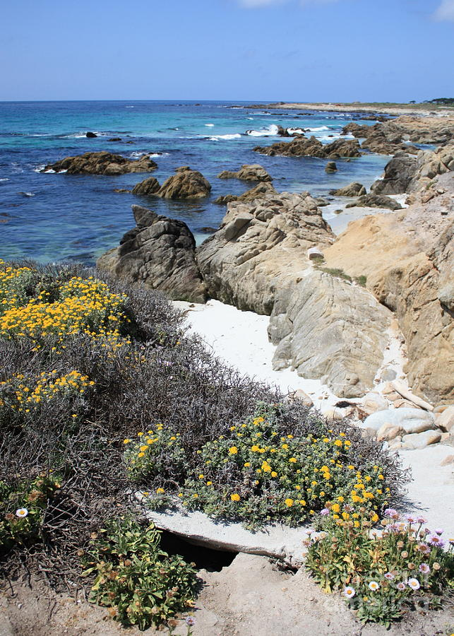 Landscape Photograph - Seaside Flowers And Rocky Shore by Carol Groenen