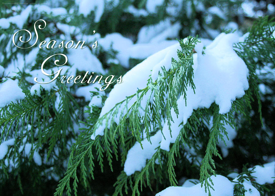 Holiday Photograph - Seasons Greetings Greeting Card- Snow On The Evergreen by Traditionally Unique Photography