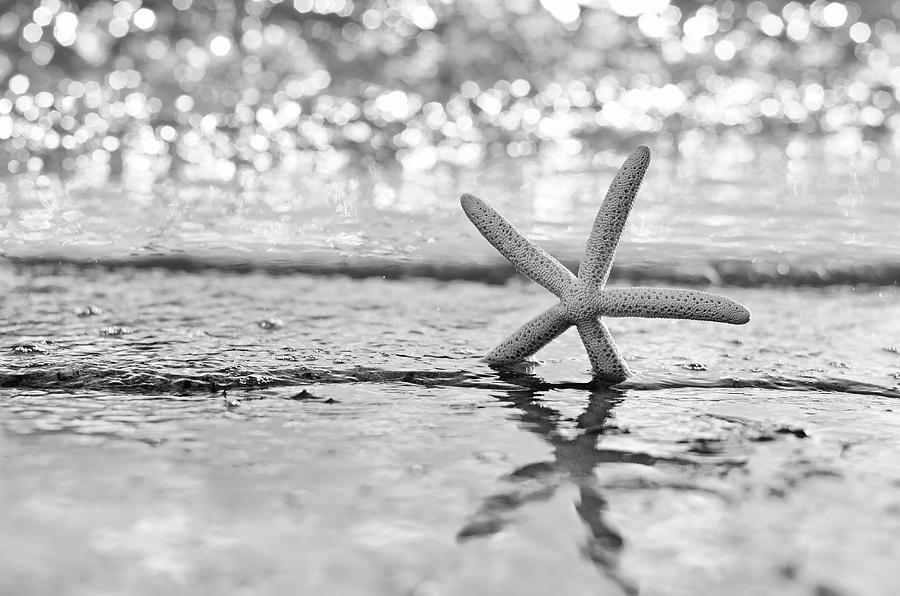 Seastar Seafoam by Laura Fasulo