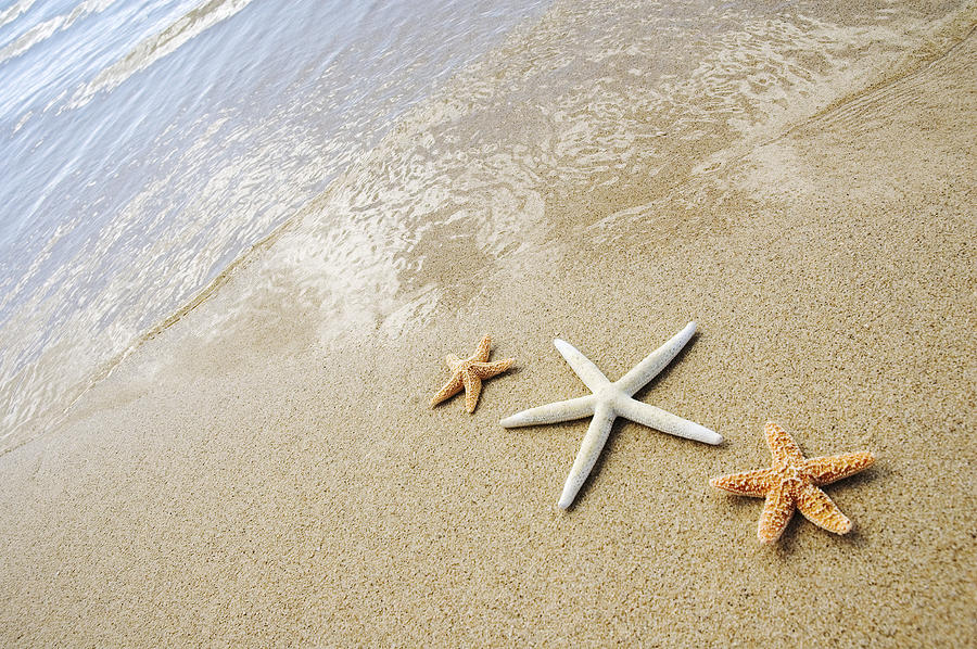 Afternoon Photograph - Seastars On Beach by Mary Van de Ven - Printscapes
