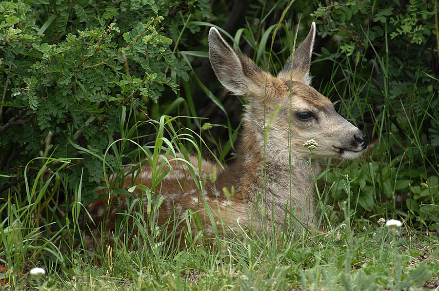 Deer Photograph - Seclusion by Keith Lovejoy