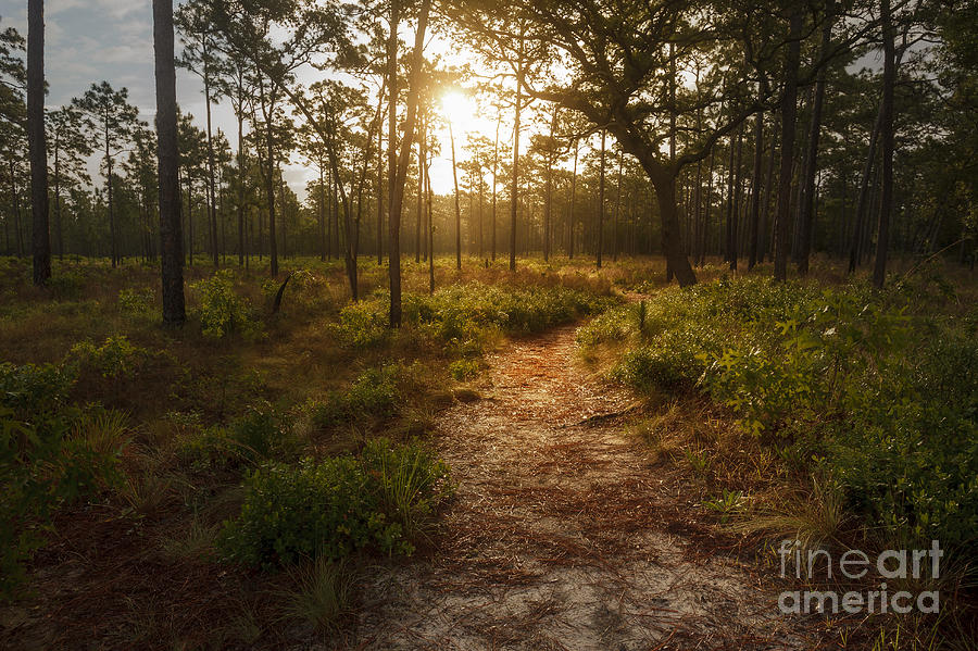 Sunrise Photograph - Second Chance by Tim Wemple