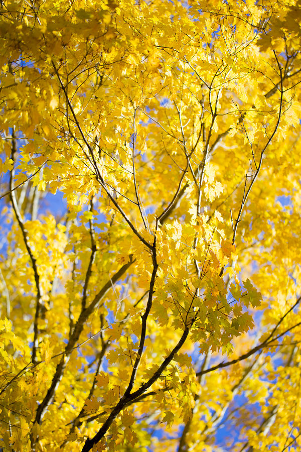 Fall Photograph - Second Spring by Keith May