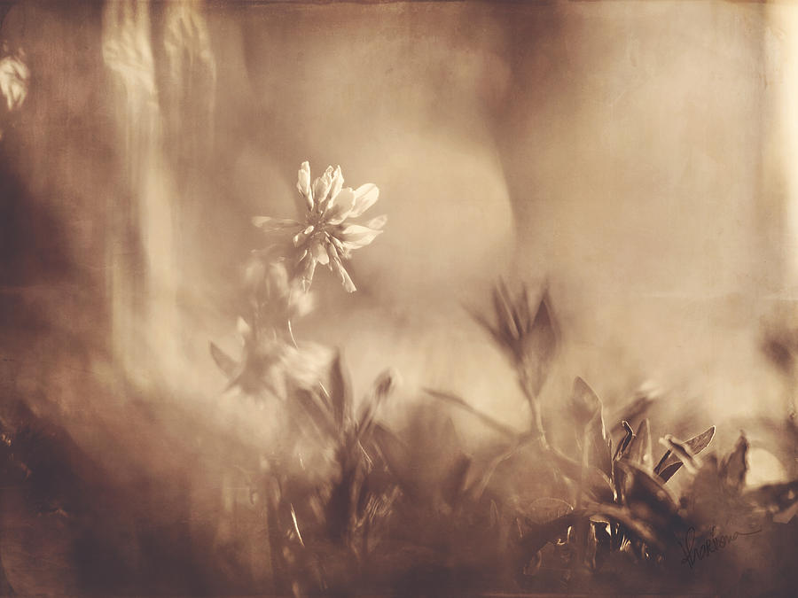 Sepia Photograph - Secret Admirer by Kharisma Sommers