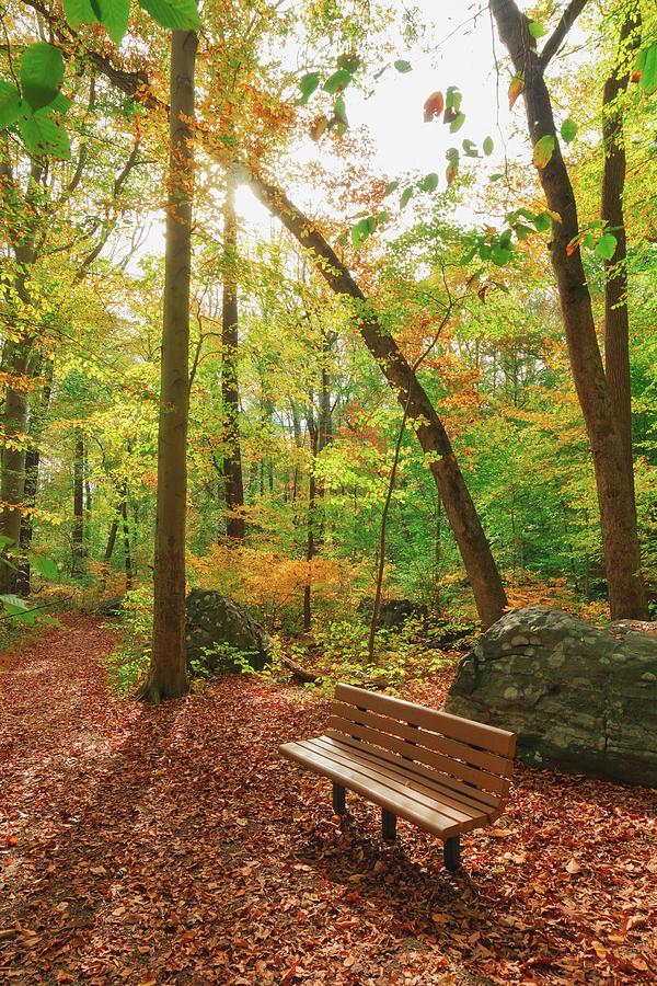 Secret Fall Photograph