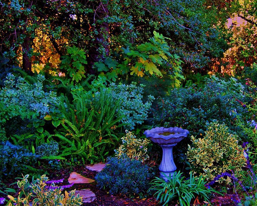 может таинственный сад фото делала