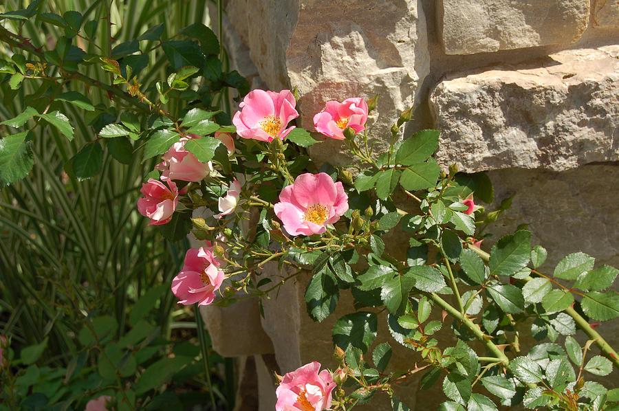 Floral Photograph - Secret Garden by Lisa Patti Konkol