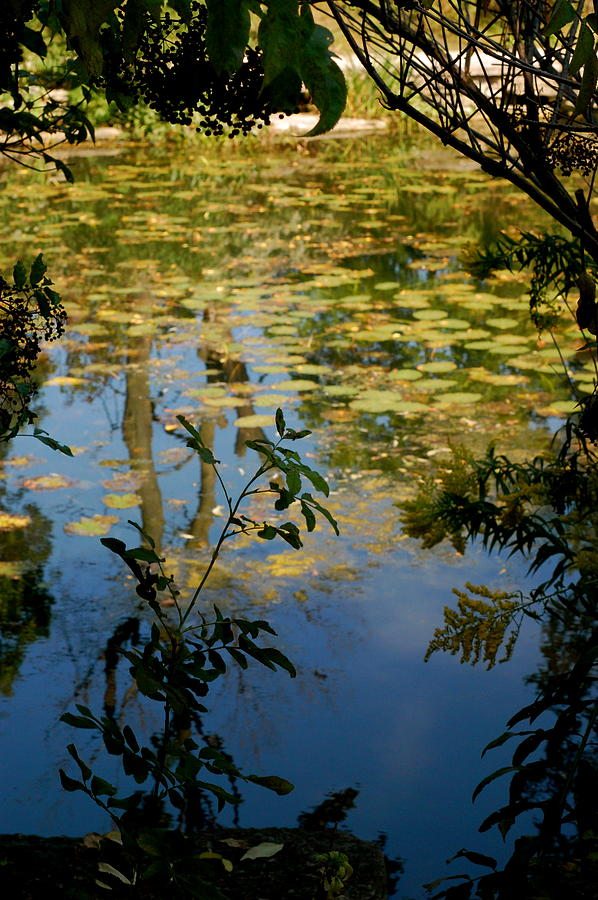 Lily Photograph - Secret Lily Pond by Tess Haun
