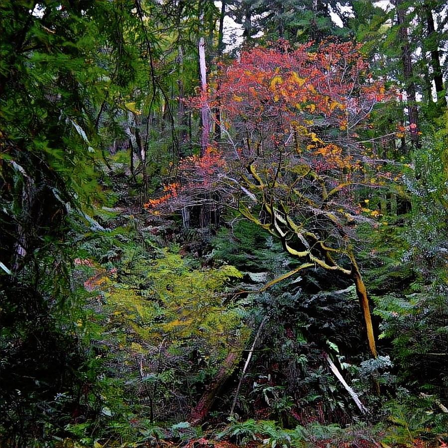 Secret Digital Art - Secret Of The Forest by Richard Hinds