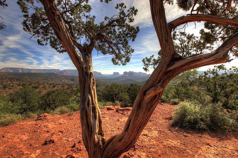 Landscape Photograph - Sedona  by Dan Nelson