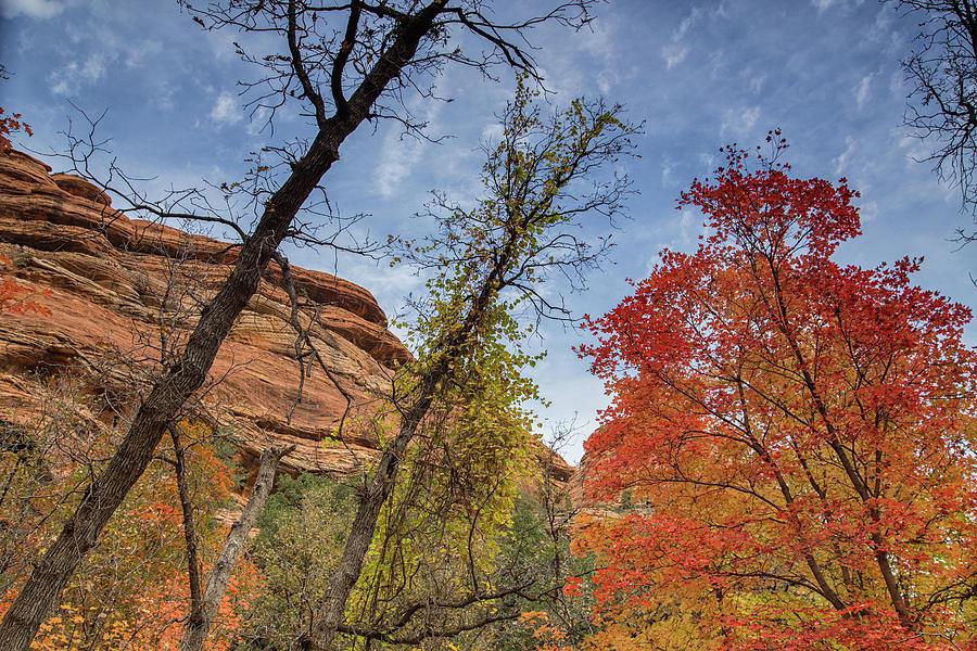 Sedona Hiking Photograph - Sedona Fall Colors by Kunal Mehra